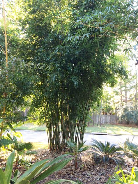 Bamboo Garden Houston by Emerald Bamboo