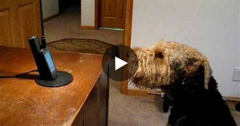 do puppies miss their mothers this was missing so called up the s reaction is a must see