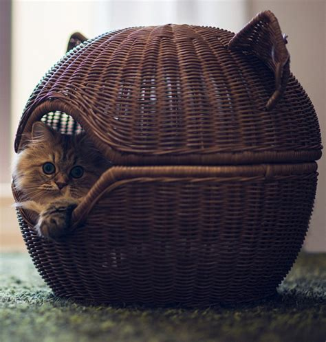 cute cat beds cute rattan cat beds