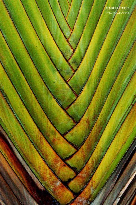 pattern seen in nature 35 best fibonacci geometry images on pinterest