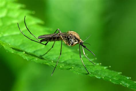 mosquitoes in backyard birmingham mosquito control mosquito squad of greater