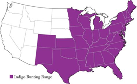 indigo bunting range map popular american birds indigo bunting f m brown s