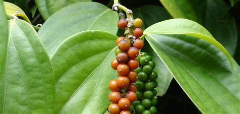 periyar spice  ayurvedic garden thekkady