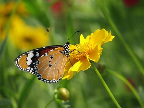 wallpaper flower and butterfly flowers for flower lovers hd flowers n butterfly desktop