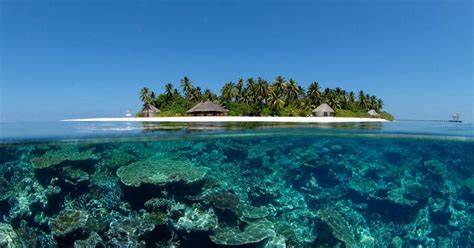dive world maldives scuba diving information scuba diving resource