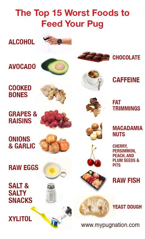bad foods for dogs health archives mypugnation