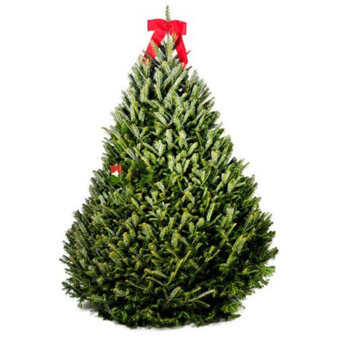 buy a christmas tree