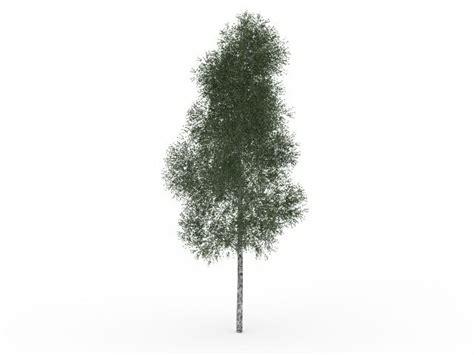 mountain paper birch tree  model ds max files   modeling   cadnav