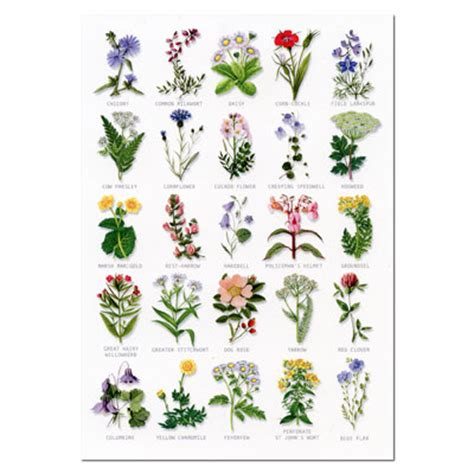 home garden wild flower seeds search results