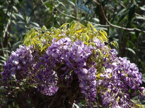 fiori di napoli napoli lungomare mergellina posillipo