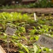 coltivazione funghi porcini vaso coltivare il peperone in vaso orto come coltivare il