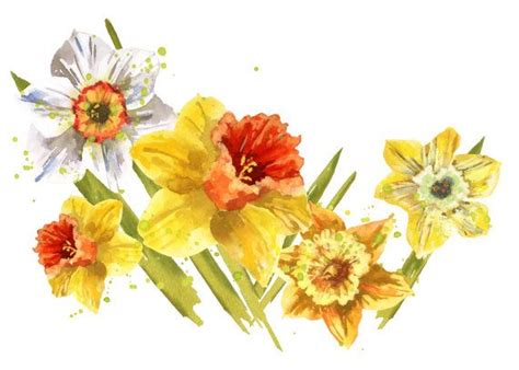 watercolor daffodil tutorial 85 best images about daffodil on pinterest cats paris