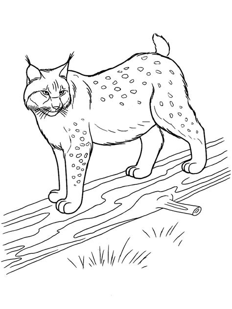 Www My Coloring Pages lynx coloring pages and print lynx coloring pages