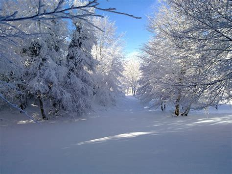 imagenes de jardines nevados bosque nevado fotos de paisajes