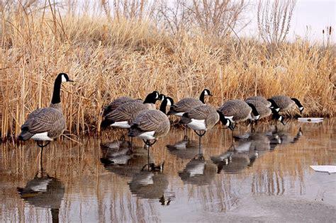 gander mtn prairie goose decoys duck decoys dakota decoy company