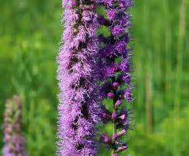 purple weed free stock photo public domain pictures