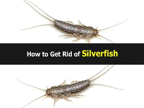 how do i get rid of silverfish in my bathroom how to get rid of silverfish