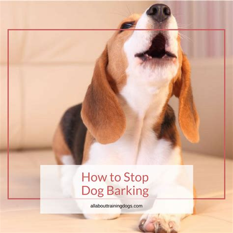 how to stop your puppy from barking how to get a dog to stop barking 5 most effective methods