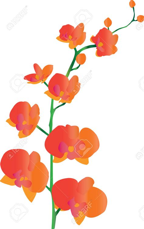 flower clipart orchid cliparts