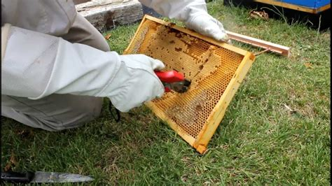 top bar hive frames how to transfer brood comb from langstroth frames to a new top bar hive youtube