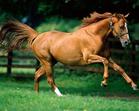 imagenes de animales en movimiento vida salvaje raw r