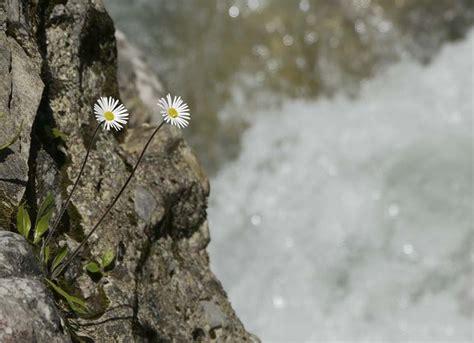 fiori di bach ansia e paura fiori di bach per ansia funzionano davvero