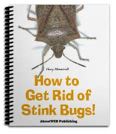 how to get rid of stink bugs getting rid of stink bugs