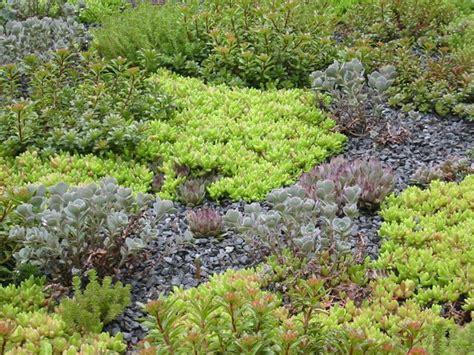 rooftop plants harvard university 29 garden street american hydrotech