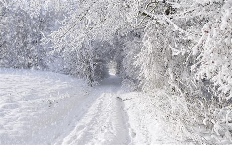 snow trees road landscape frozen trees wallpapers and