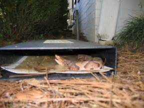 snake trap home depot snake trap copperhead rattlesnake moccasin coral snake