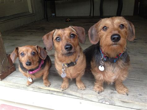 small to medium sized dogs the shirk report volume 287 171 twistedsifter