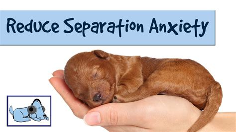 calming sounds for dogs to reduce separation anxiety in dogs relaxing sounds stressed sounds for