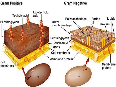 difficult  treat gram negative bacteria