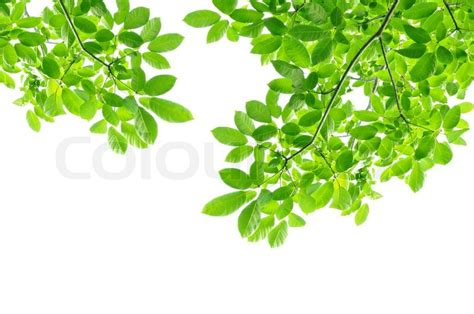 Poster Daun Suplir green leaf background border design stock photo
