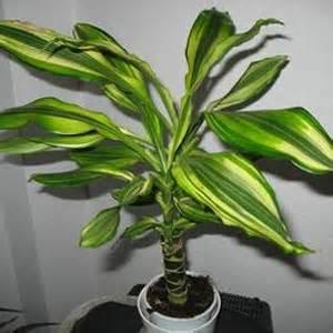 Planta De Exterior Resistente