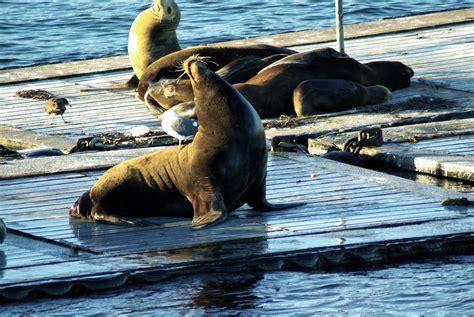san diego boat tours coronado san diego whale watching tours flagship cruises events