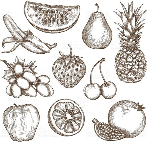 Fruit sketches hand drawing stock vector art amp more images of apple fruit 529133086 istock