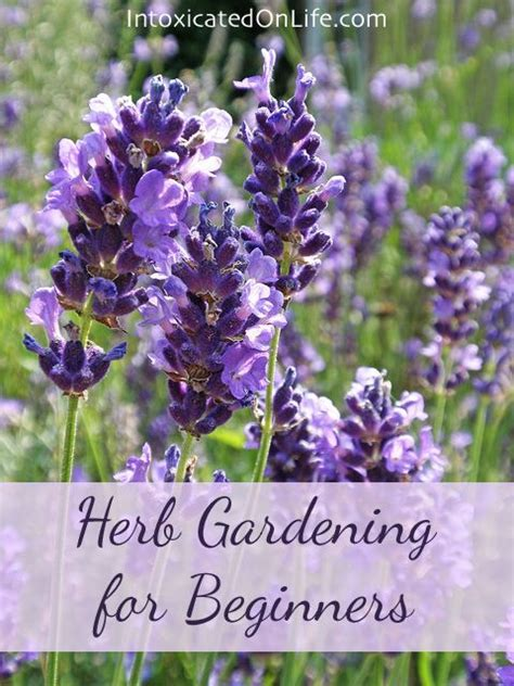 Herb Gardening For Beginners by Herb Gardening For Beginners By Vicki Arnold 1 Comment