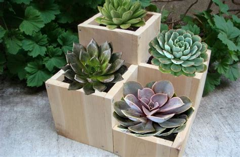vasi in legno per piante vasi in legno per piante grasse fai da te pagina 2 di 2