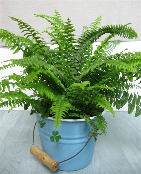 common house plants   clean  filter indoor air