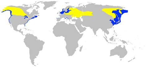 file podiceps grisegena range map undistorted png