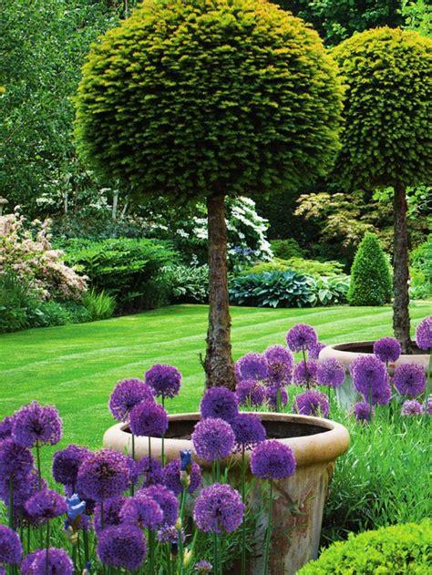 Summer Garden Ideas Garden With Lollipop Yews And Allium Purple Sensation In Early Summer Garden