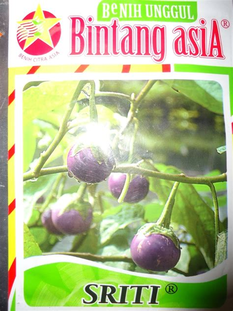 Bibit Terong Manis jual bibit benih terong bulat ungu lalap geger