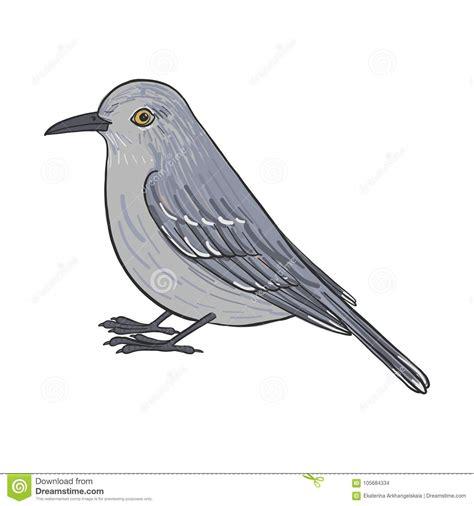Northern Mockingbird Drawing