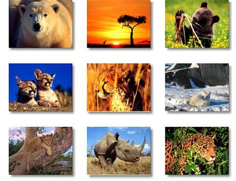 son los animales ms infieles a su pareja que nosotros taringa animales salvajes para ni 241 os imagui