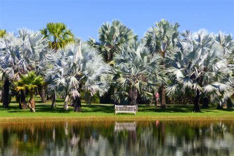 Fairchild Tropical Botanic Garden Miami A Visit To Fairchild Tropical Botanic Garden Florida Botanical Gardens