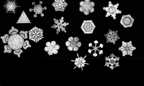 wilson bentley the snowflake american profile