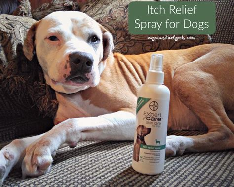 pruritus in dogs itch relief for dogs from bayerexpertcare pawsitively pets