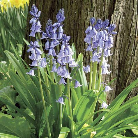 wood hyacinth wood hyacinth mix pack of 20 perfect