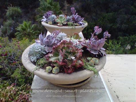 winterizing succulents e course successful succulent
